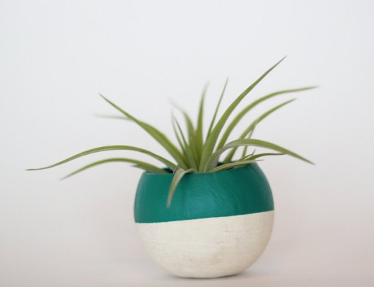 Bird and Feather Co - Air Plant Pod, $10