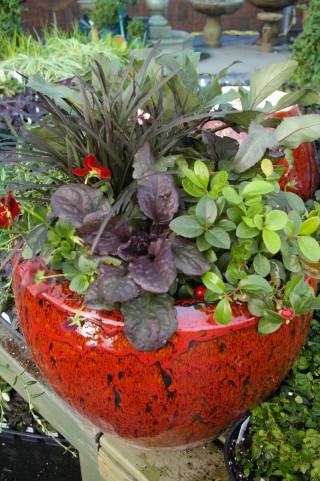 Ceramic Container Garden