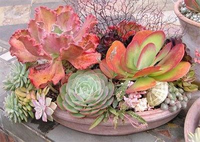 Ceramic Container Garden_3