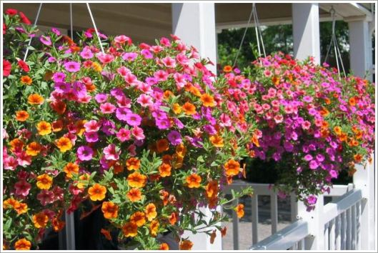 Flowers - Hanging Baskets