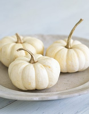 White Pumpkin_1