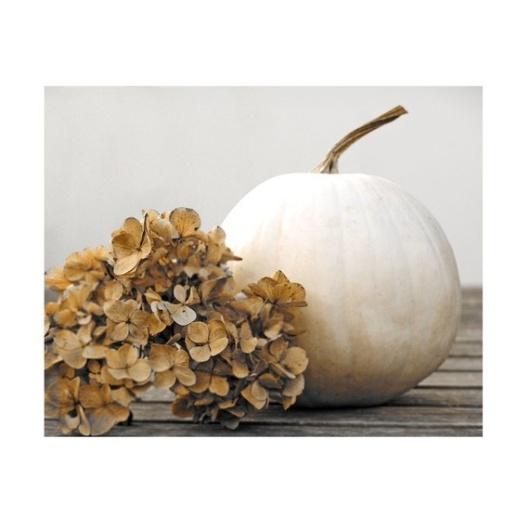 White Pumpkin_10
