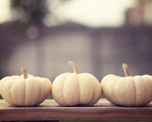 White Pumpkin_11