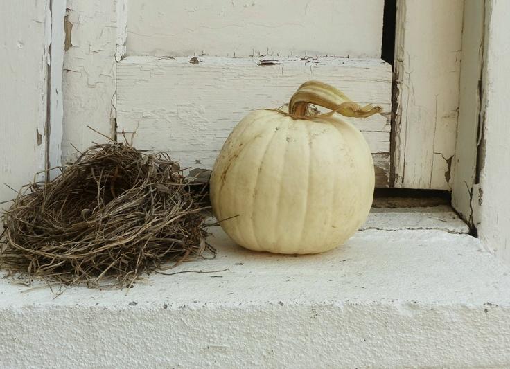 White Pumpkin_14
