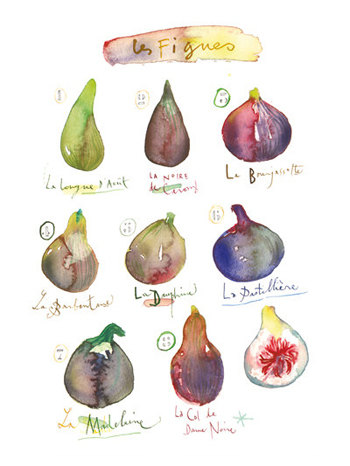 Figs - 8x10 poster, $37