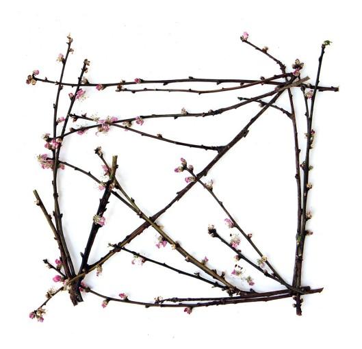 almond-blossom-branch-box