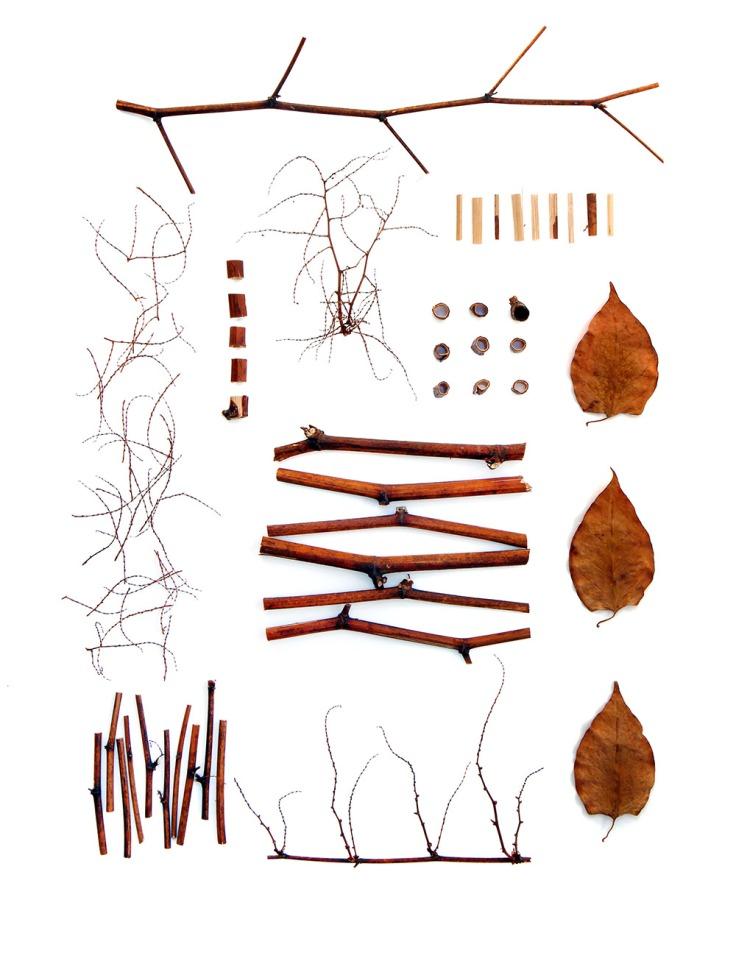 japanese-knotweed