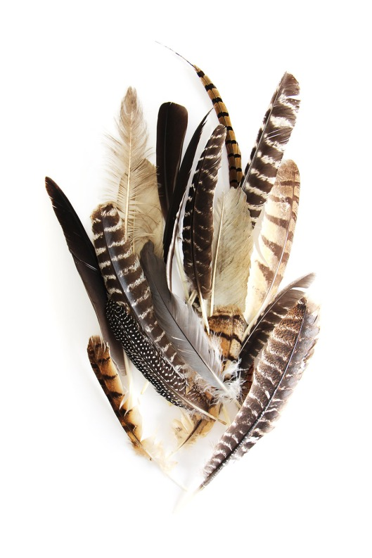 large-feather-collection